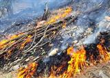 20 هکتار از عرصههای طبیعی ایلام در آتش سوخت