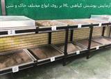 چسب گیاهی راه حل مخترع ایرانی برای معضل گرد و غبار