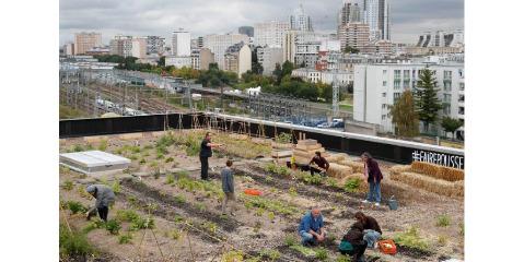 کارمندان اداره پست پاریس روی سقف اداره ، کشاورزی می کنند