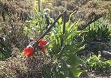 خطر انقراض گونههای گیاهی بومی ایران