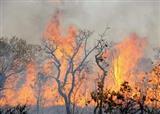 اطفاء آتش در بیش از 200 هکتار از جنگلها و مراتع کشور