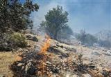 آمادهباش کامل در جهت جلوگیری از آتشسوزی جنگلهای تهران